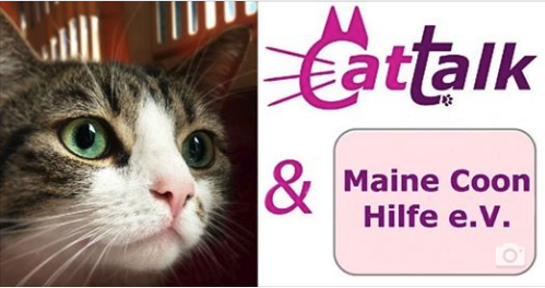 logo cattalk mch